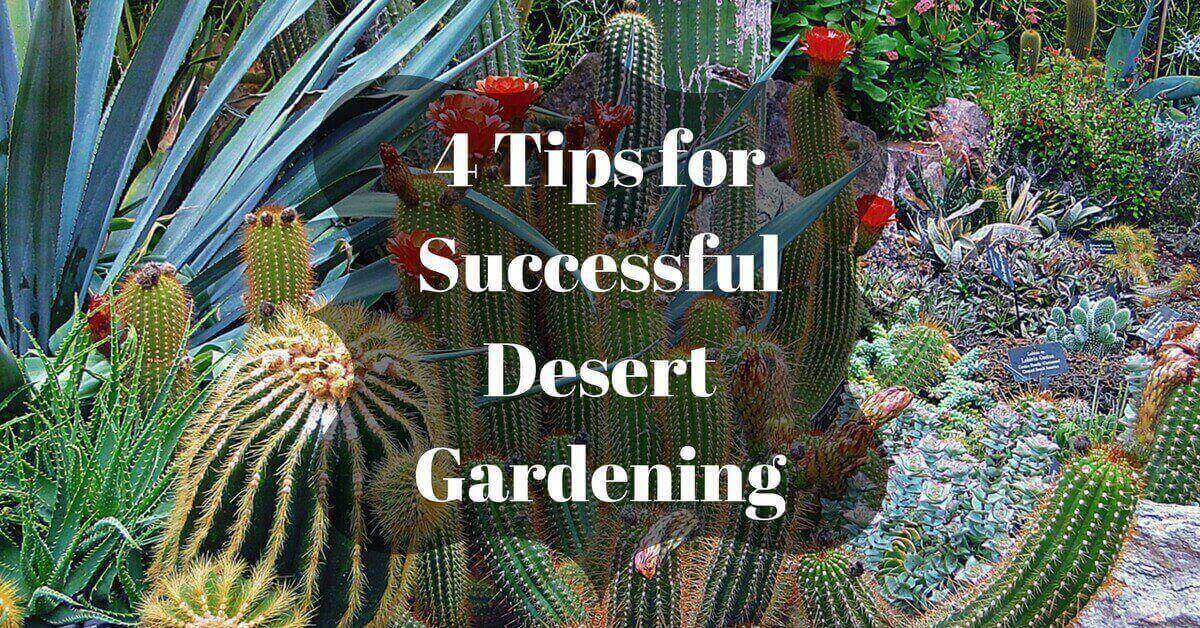 4-Tips-for-Successful-Desert-Gardening