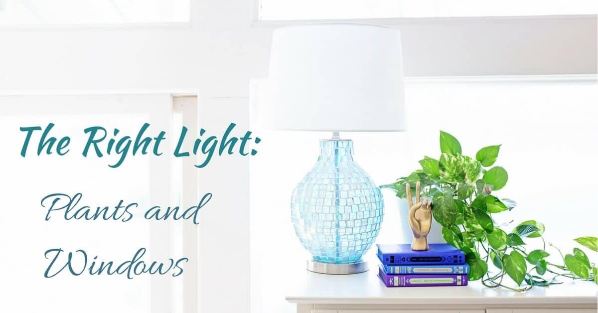 The Right Light: Plants & Windows