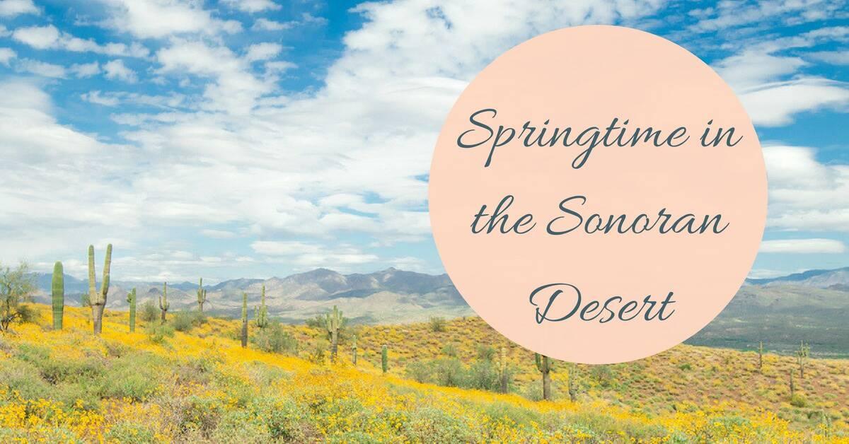CC Sunscreens - Springtime in the Sonoran Desert