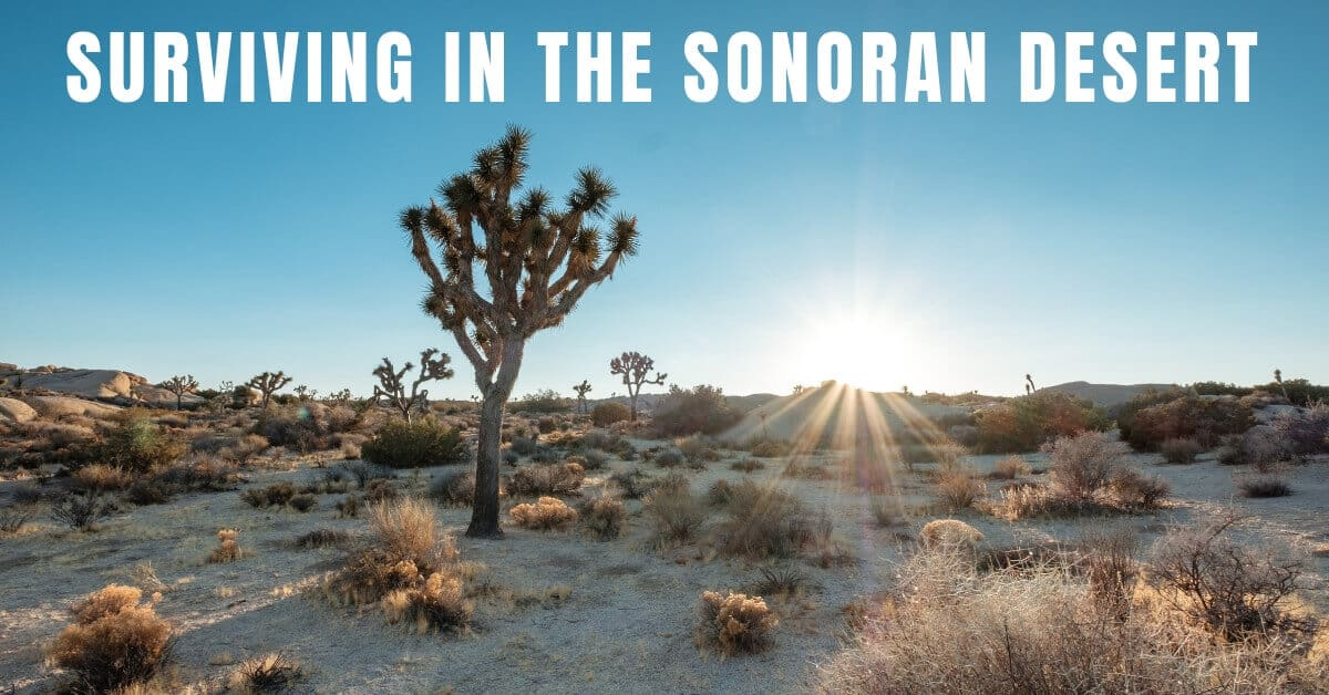 Surviving in the Sonoran Desert