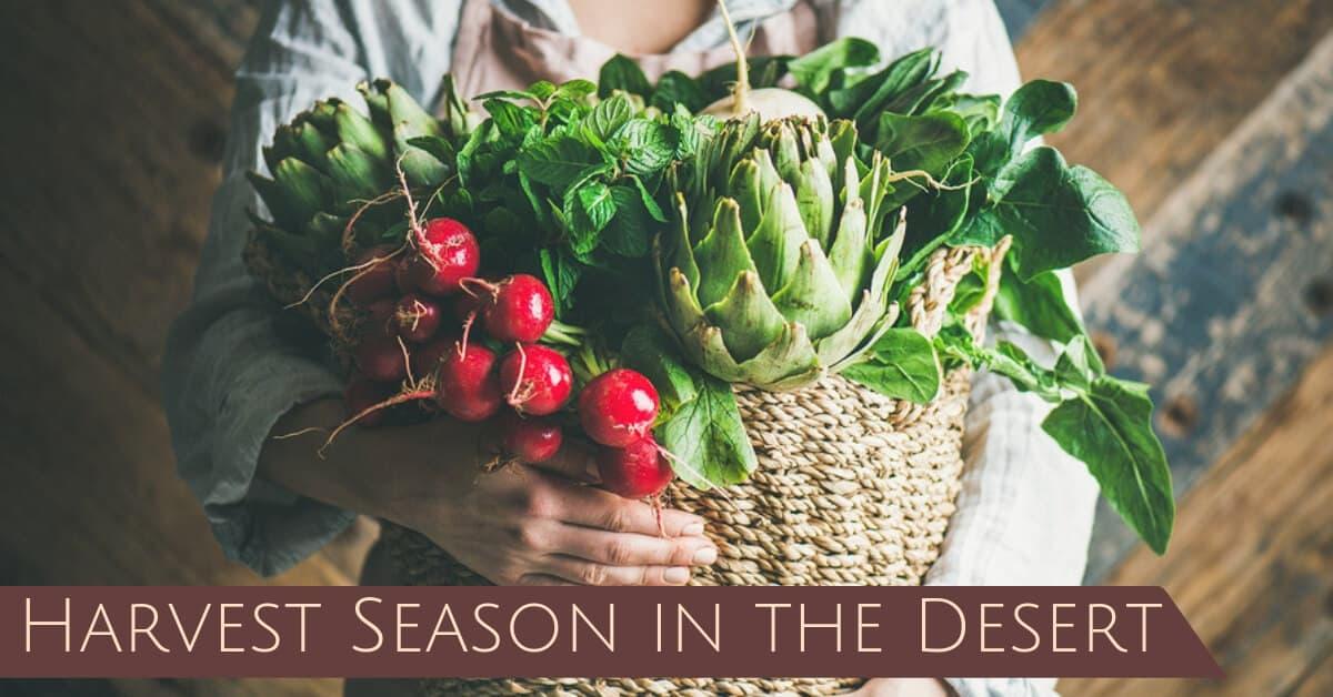 Harvest Season in the Desert