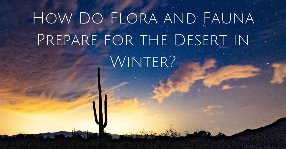 How Do Animals Prepare for the Desert in Winter?