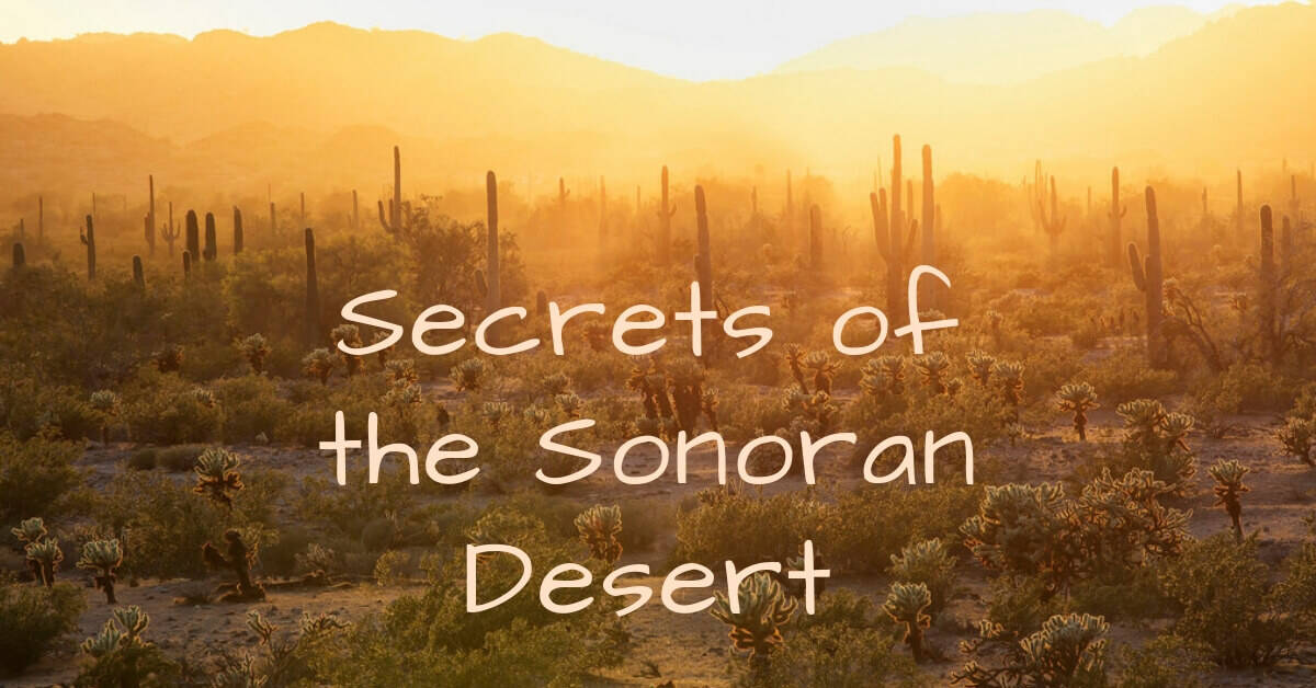 Secrets of the Sonoran Desert
