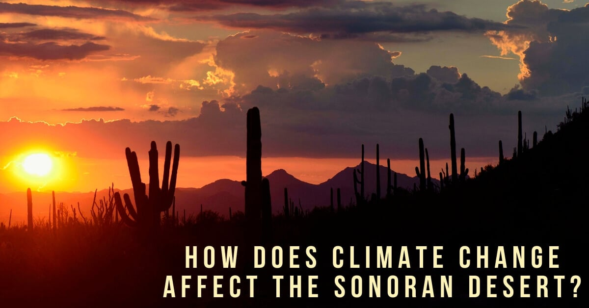 How Does Climate Change Affect the Sonoran Desert?