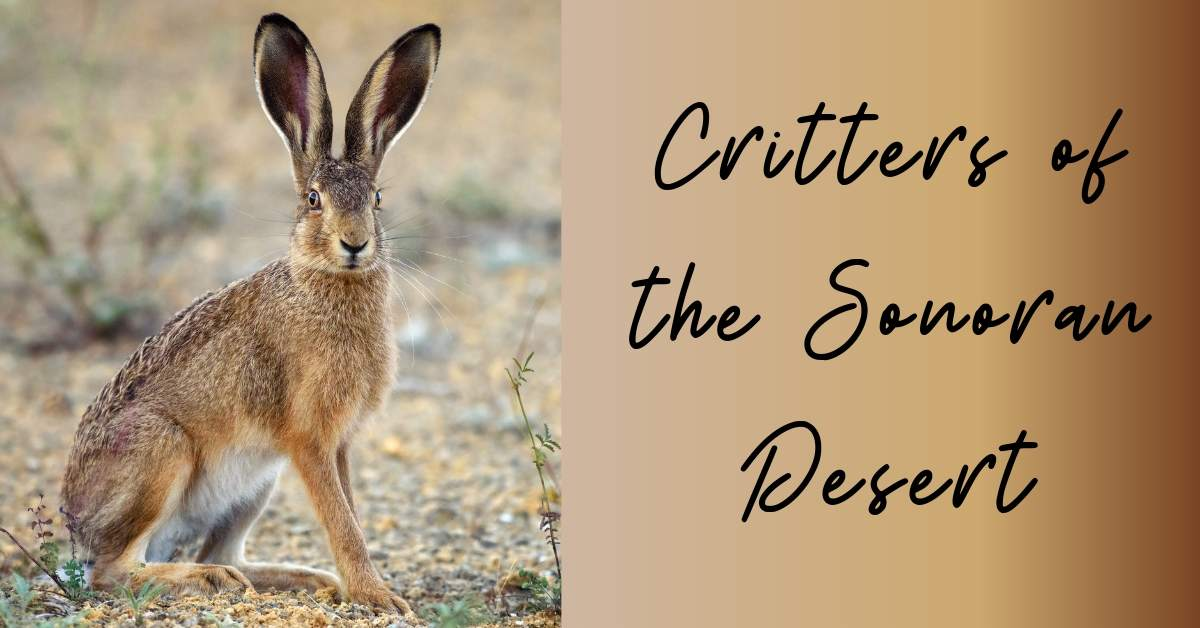 Critters of the Sonoran Desert