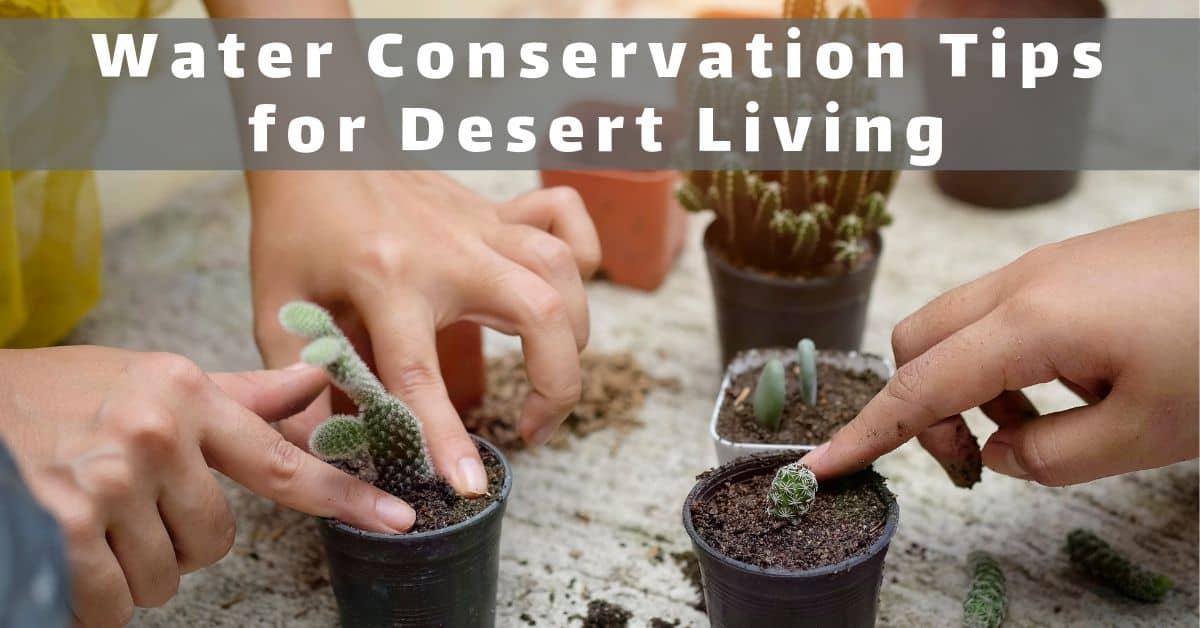 Water Conservation Tips for Desert Living