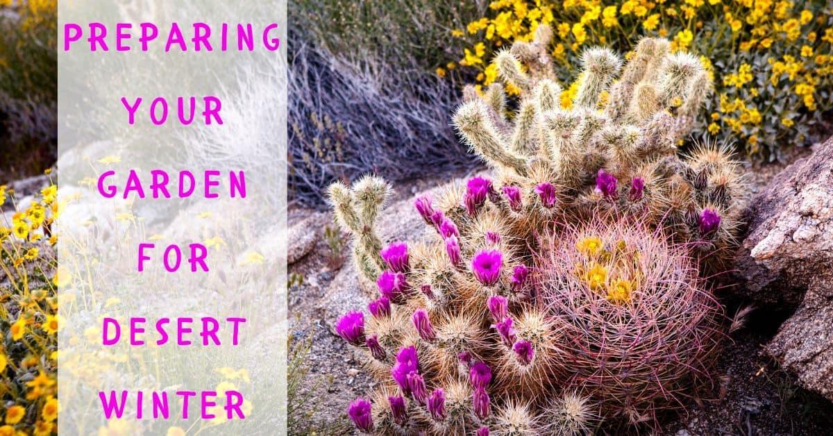 Preparing Your Garden for the Desert Winter
