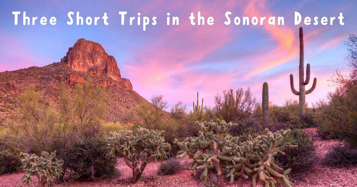 Three Short Trips in the Sonoran Desert