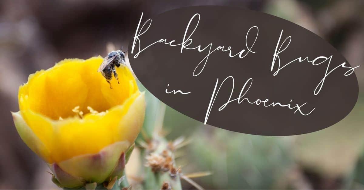 Backyard Bugs in Phoenix