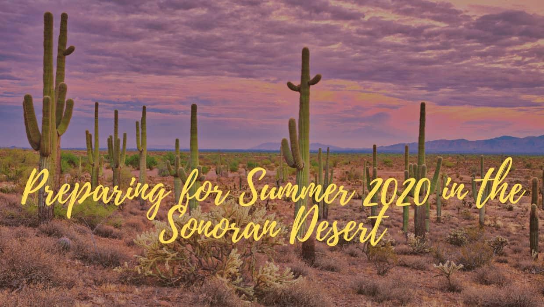 Preparing for Summer 2020 in the Sonoran Desert
