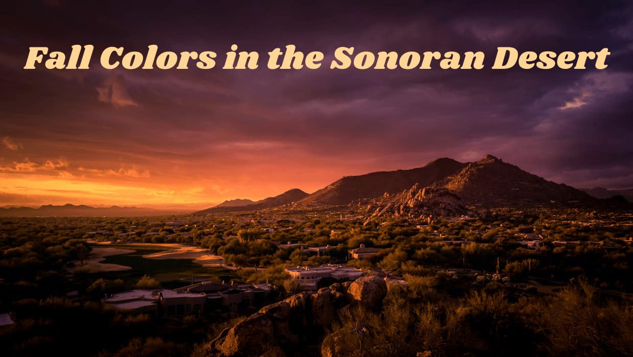 Fall Colors in the Sonoran Desert