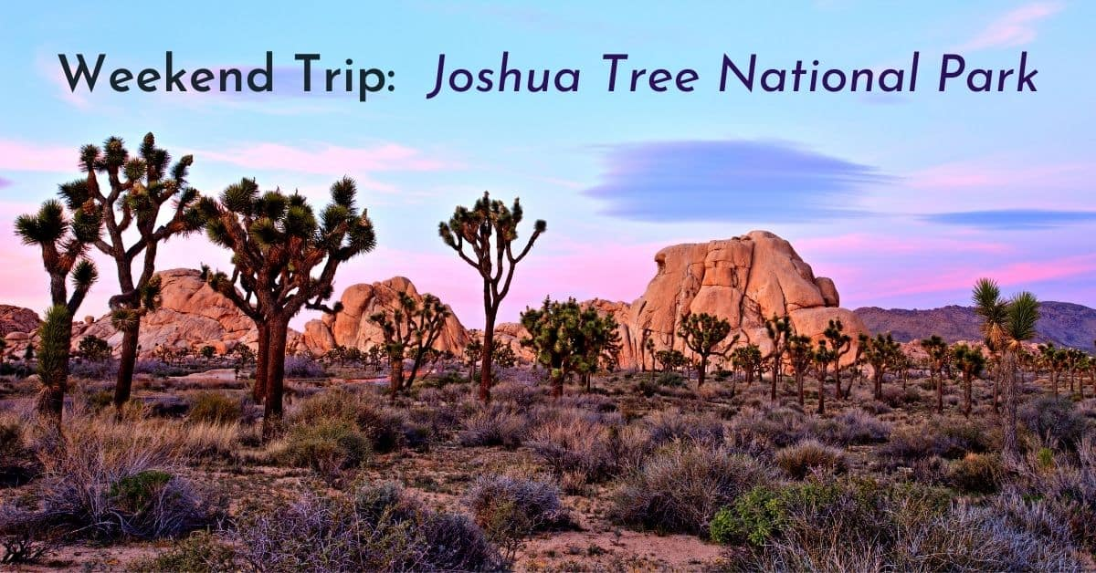 Weekend Trip: Joshua Tree National Park